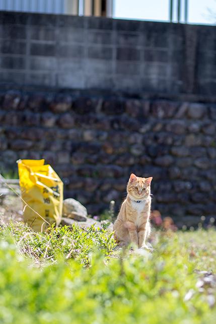 0312ogishi_cat.jpg