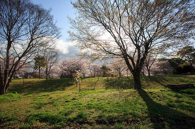 0402sakura.jpg